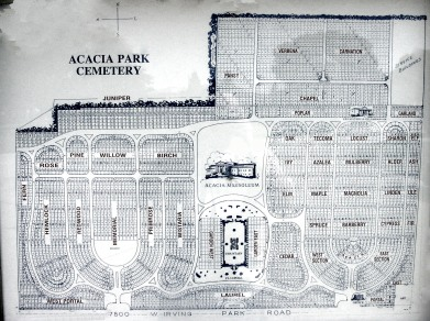 acacia blue.jpg
